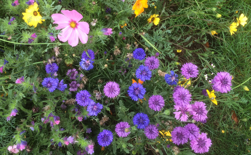 Wild flowers - mostly purple